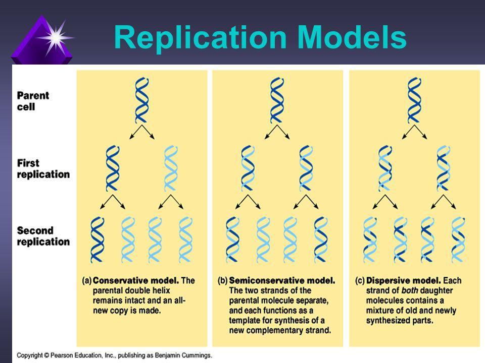Replication Models