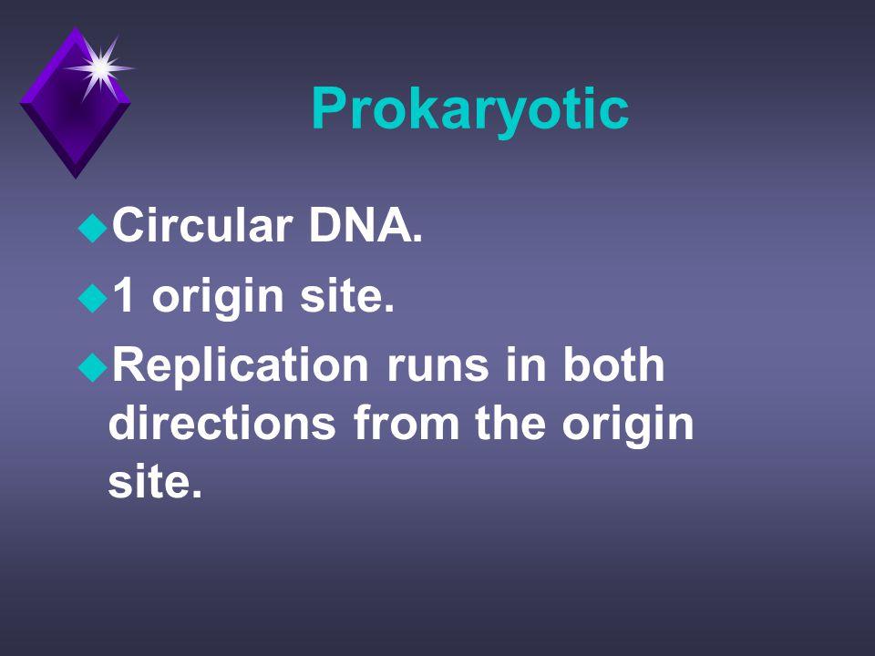 Prokaryotic u Circular DNA. u 1 origin site.