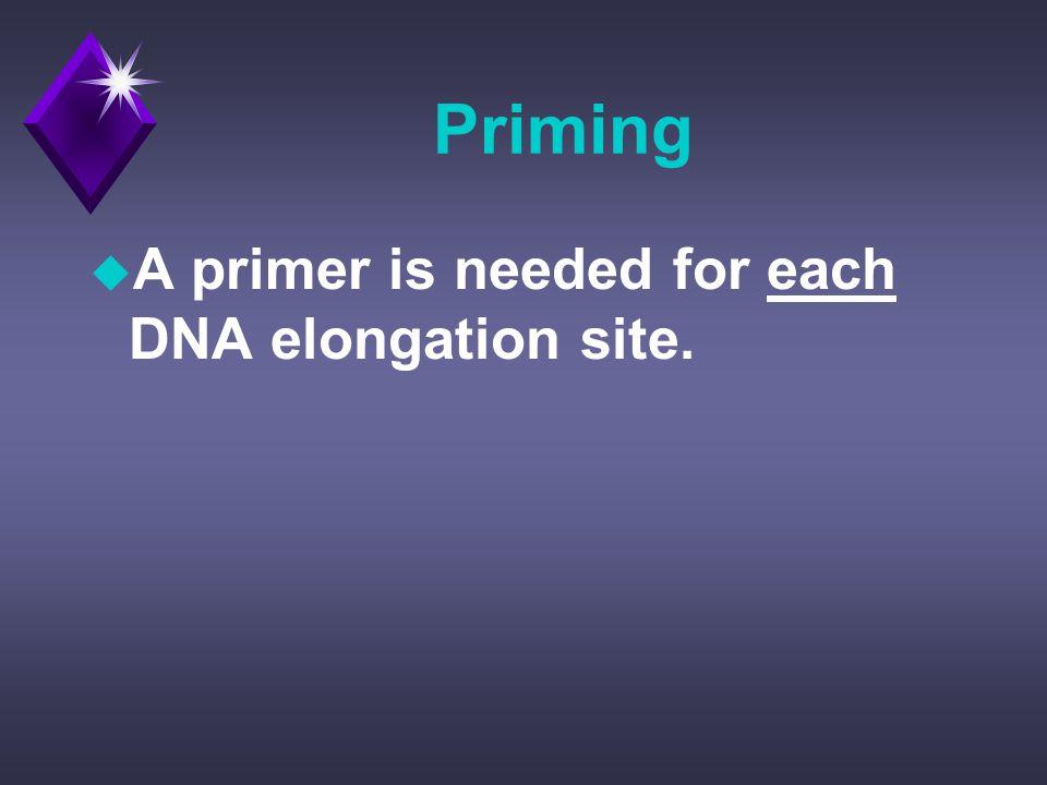 Priming u A primer is needed for each DNA elongation site.