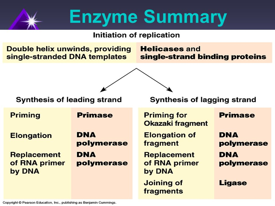 Enzyme Summary