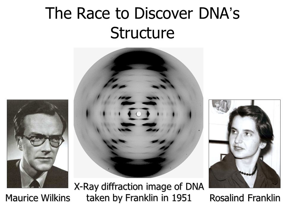 The Race to Discover DNA's Structure Maurice Wilkins Rosalind Franklin X-Ray diffraction image of DNA taken by Franklin in 1951