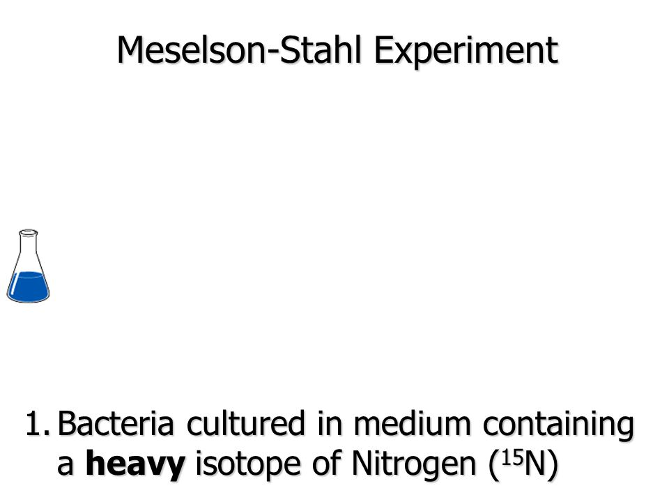 1.Bacteria cultured in medium containing a heavy isotope of Nitrogen ( 15 N) Meselson-Stahl Experiment