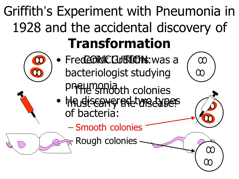 Griffith's Experiment with Pneumonia in 1928 and the accidental discovery of Transformation Frederick Griffiths was a bacteriologist studying pneumonia He discovered two types of bacteria: –Smooth colonies –Rough colonies CONCLUSION: The smooth colonies must carry the disease!