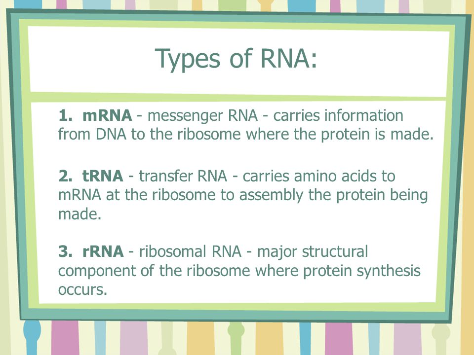 Types of RNA: 1.