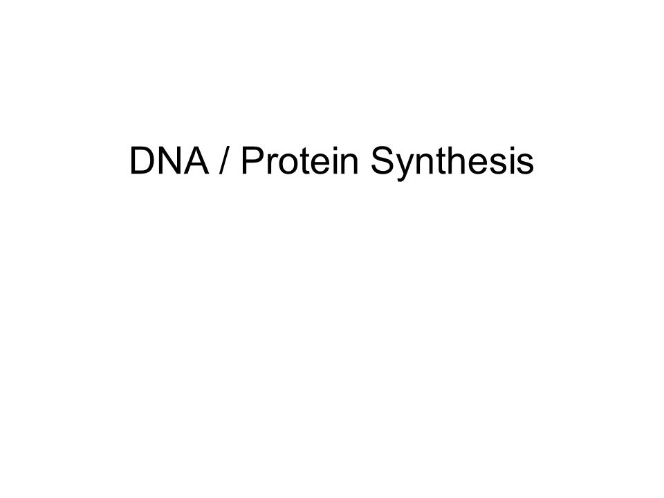 DNA / Protein Synthesis