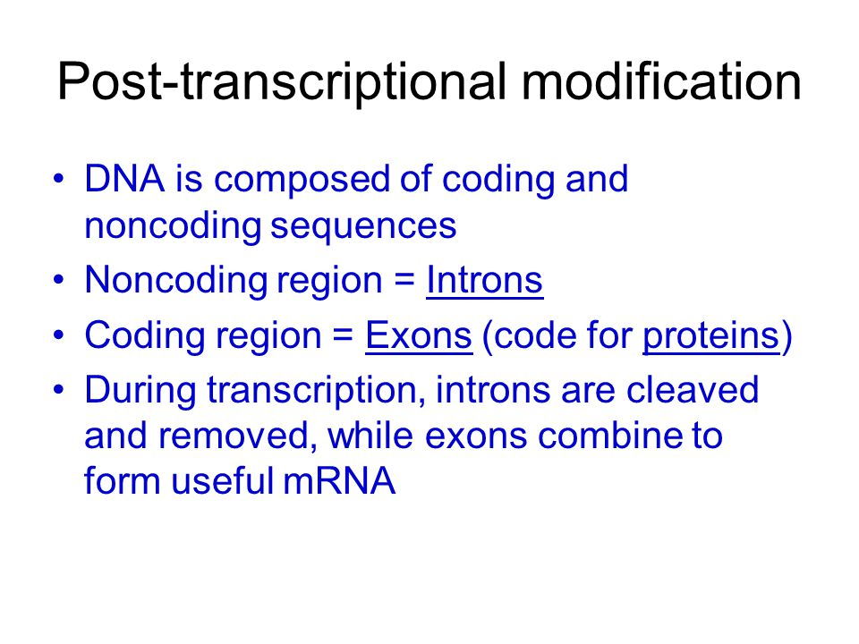 Post-transcriptional modification DNA is composed of coding and noncoding sequences Noncoding region = Introns Coding region = Exons (code for protein