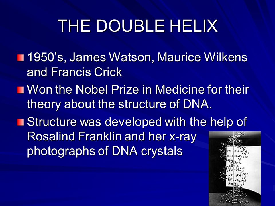 SECTION 2: DNA STRUCTURE 1950's: By now most scientists understood and accepted that DNA was molecule that contained the hereditary information. What