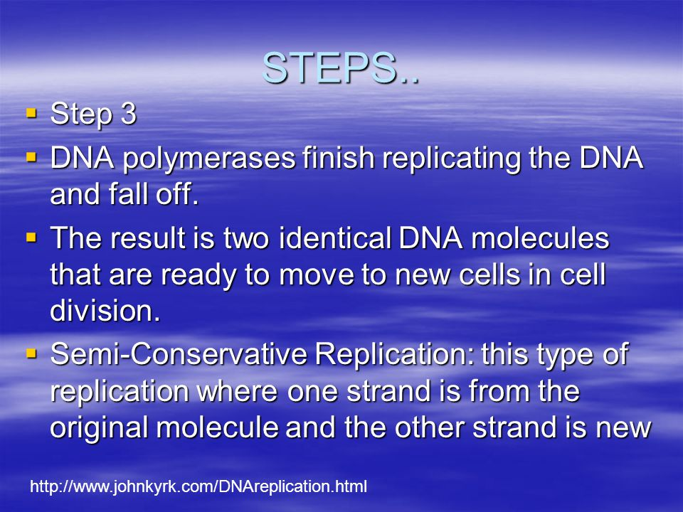 STEPS..  Step 2  DNA Polymerase: enzymes that ADD complimentary that ADD complimentary nucleotides. nucleotides.  Nucleotides are found floating fr