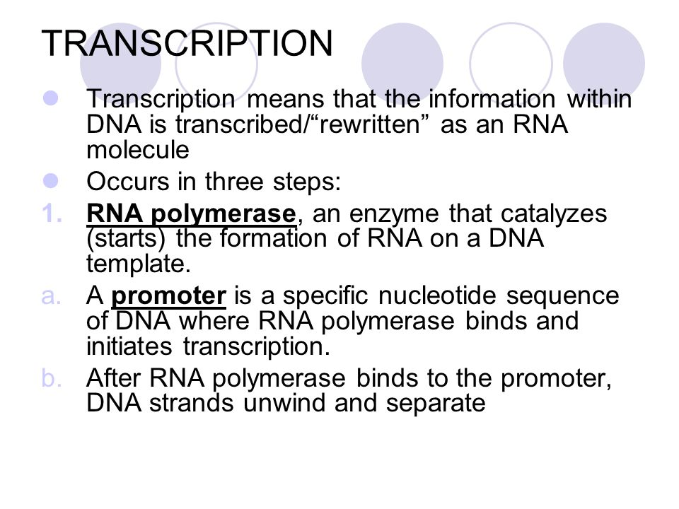 FLOW OF GENETIC INFORMATION How the information goes from DNA to the Ribosomes and into protein form. 1.Transcription – DNA acts as a template for the