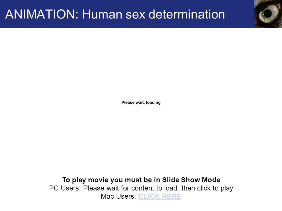 ANIMATION: Human sex determination To play movie you must be in Slide Show Mode PC Users: Please wait for content to load, then click to play Mac Users: CLICK HERECLICK HERE