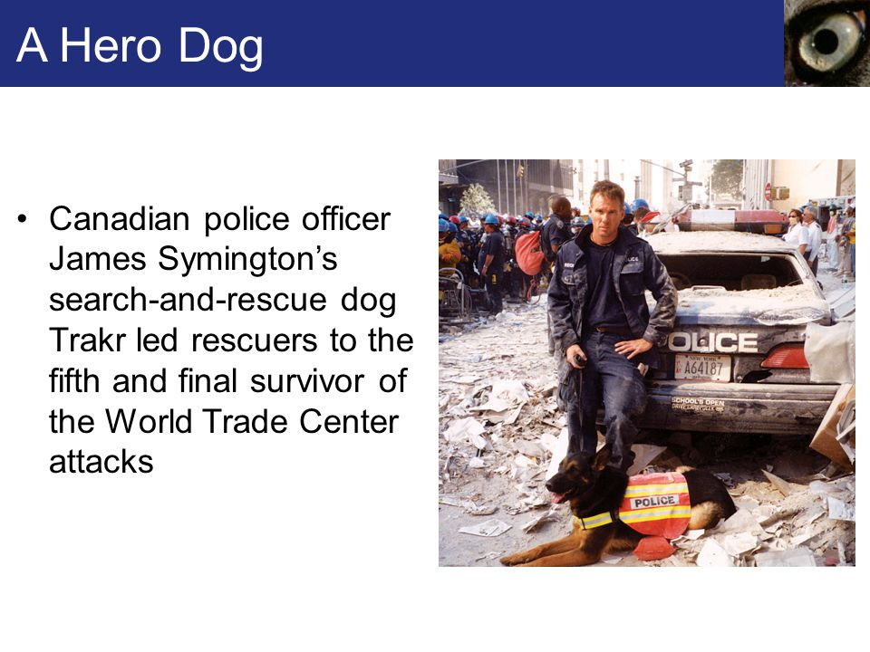 A Hero Dog Canadian police officer James Symington's search-and-rescue dog Trakr led rescuers to the fifth and final survivor of the World Trade Center attacks