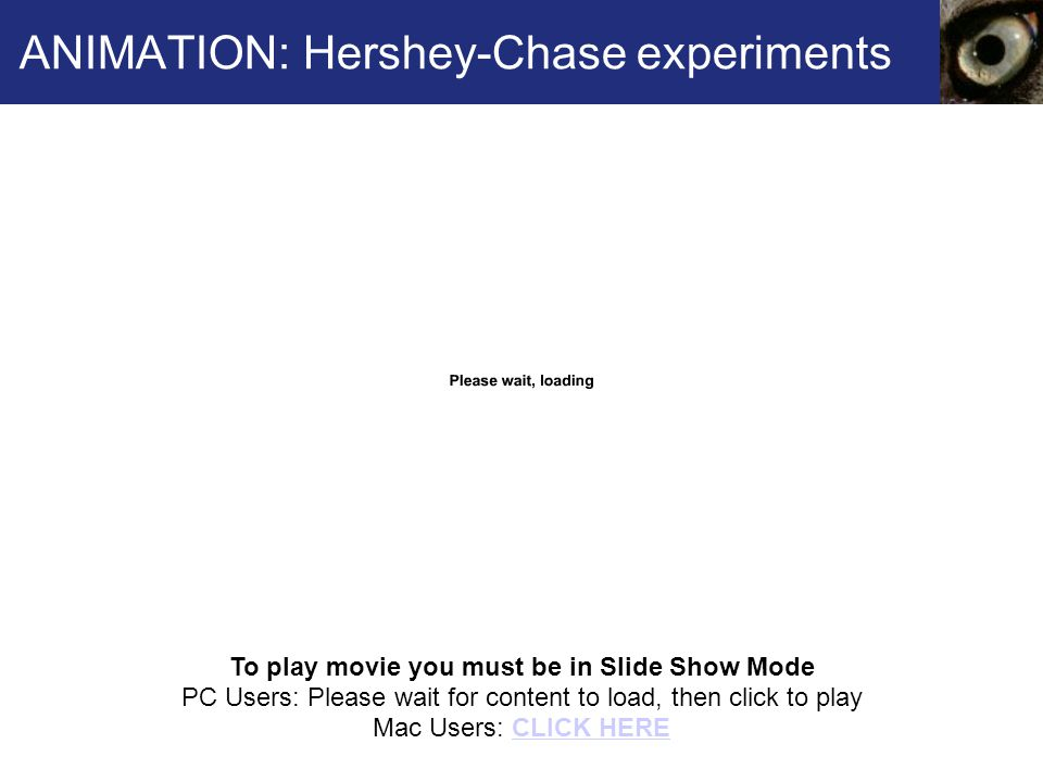 ANIMATION: Hershey-Chase experiments To play movie you must be in Slide Show Mode PC Users: Please wait for content to load, then click to play Mac Users: CLICK HERECLICK HERE