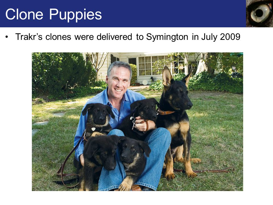 Clone Puppies Trakr's clones were delivered to Symington in July 2009