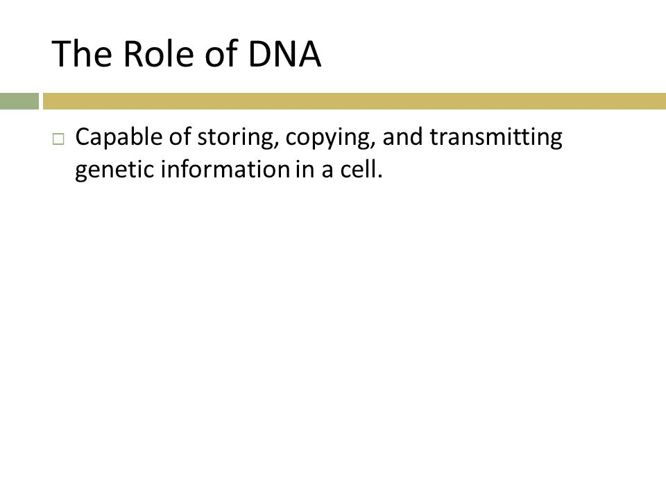 The Role of DNA  Capable of storing, copying, and transmitting genetic information in a cell.