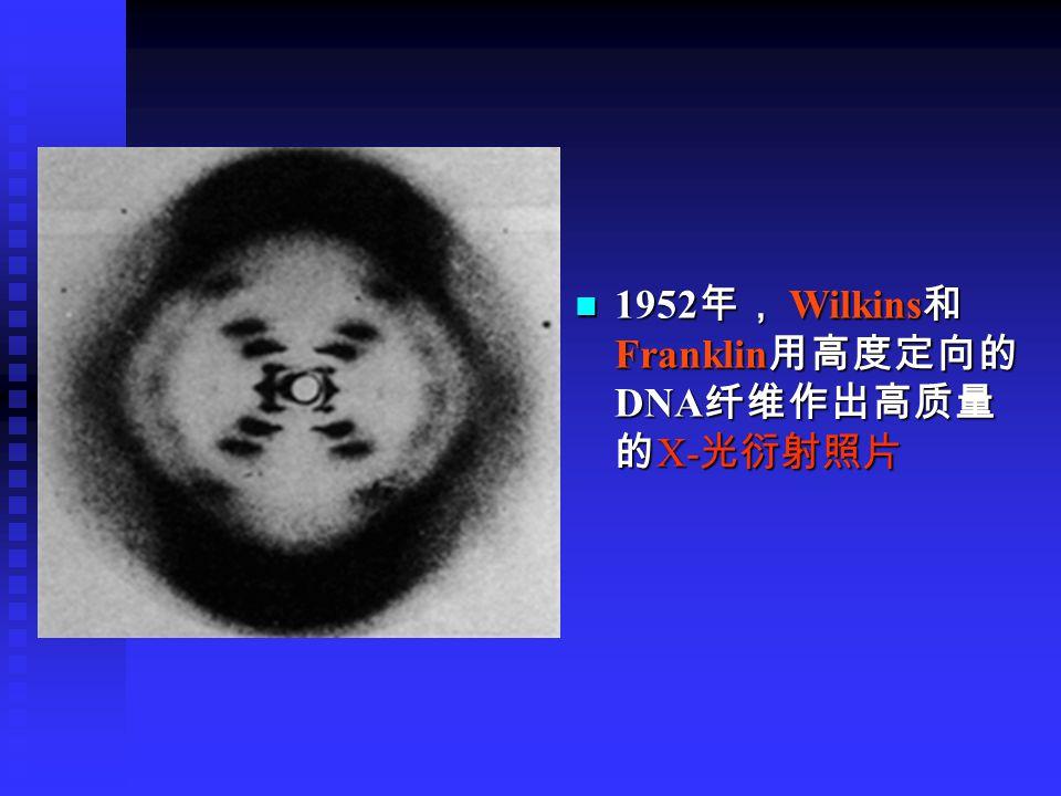 1952 年, Wilkins 和 Franklin 用高度定向的 DNA 纤维作出高质量 的 X- 光衍射照片 1952 年, Wilkins 和 Franklin 用高度定向的 DNA 纤维作出高质量 的 X- 光衍射照片