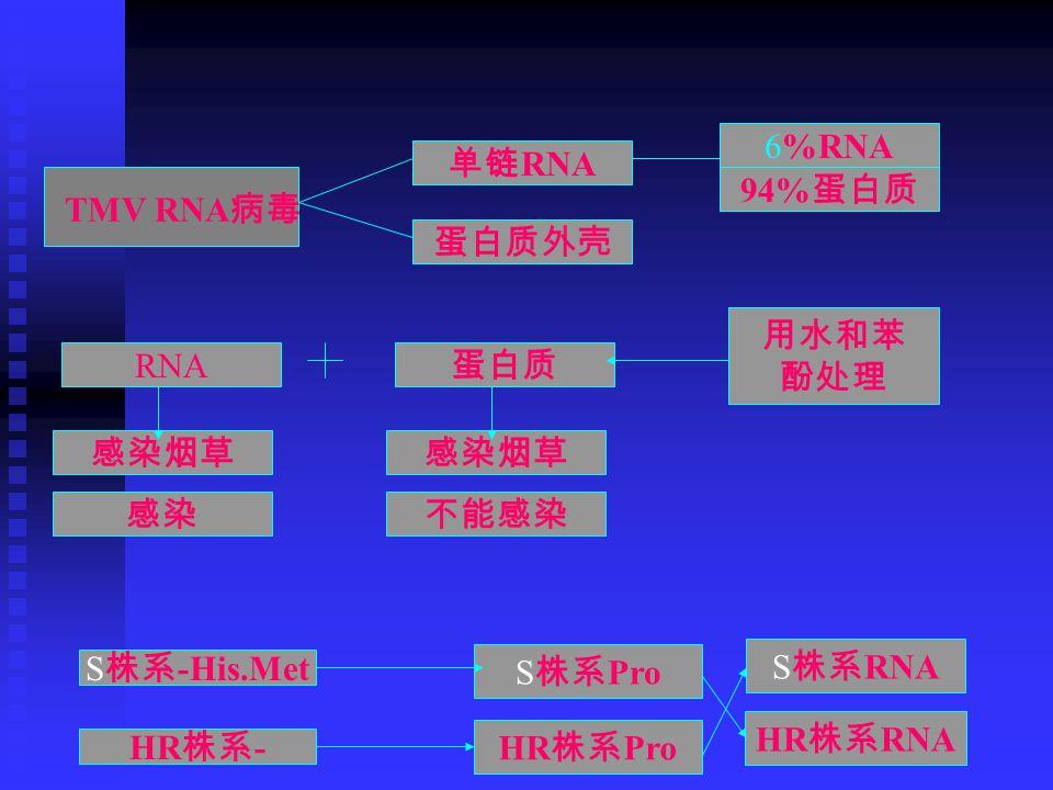 TMV RNA 病毒 单链 RNA 蛋白质外壳 6%RNA 94% 蛋白质 用水和苯 酚处理 RNA 蛋白质 感染烟草 感染不能感染 S 株系 -His.Met HR 株系 - S 株系 Pro HR 株系 Pro S 株系 RNA HR 株系 RNA