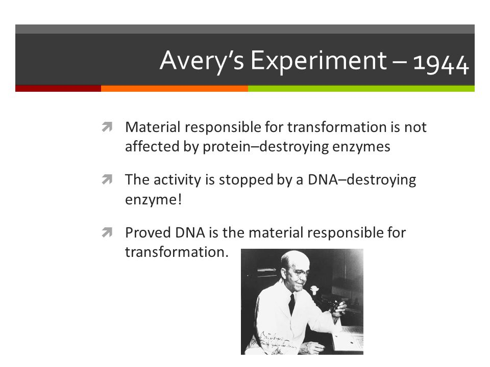 Hersey and Chase's Experiment – 1952  Worked with bacteriophages (viruses), which are made of only DNA and protein  Alternated between using radioactive DNA or radioactive protein  Sulfur isotope ( 35 S) – only found in protein coat  Phosphorous isotope ( 32 P) – only found in DNA  Looked to see if bacteria became radioactive when radioactive DNA or when radioactive protein was inserted by the virus  Hershey Chase Video Clip Hershey Chase Video Clip