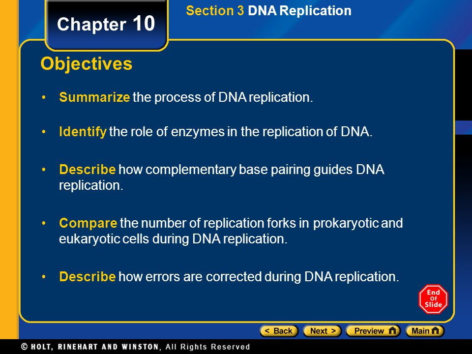 Section 2 DNA Structure Chapter 10 Complementary Bases Hydrogen bonding between the complementary base pairs, G-C and A-T, holds the two strands of a