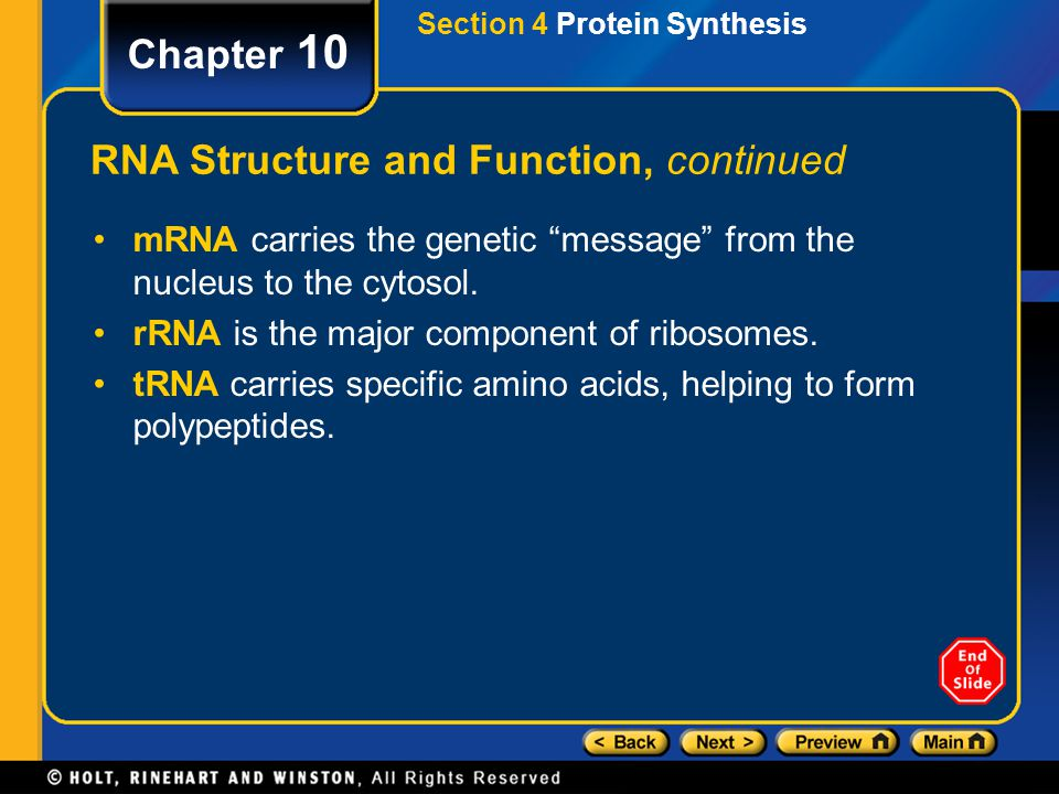 Chapter 10 RNA Structure and Function, continued Types of RNA –Cells have three major types of RNA: messenger RNA (mRNA) ribosomal RNA (rRNA) transfer