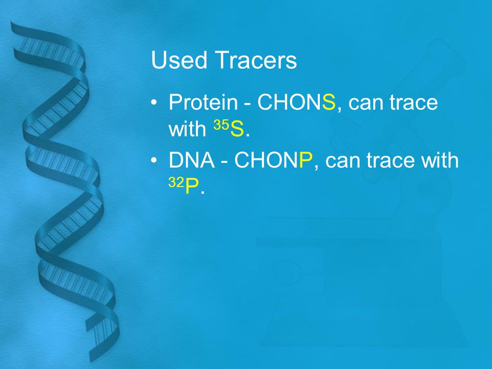 Used Tracers Protein - CHONS, can trace with 35 S. DNA - CHONP, can trace with 32 P.