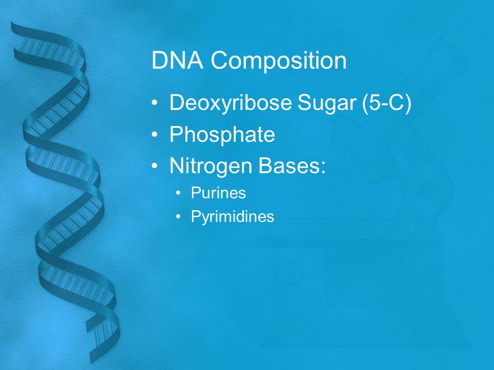 DNA Composition Deoxyribose Sugar (5-C) Phosphate Nitrogen Bases: Purines Pyrimidines