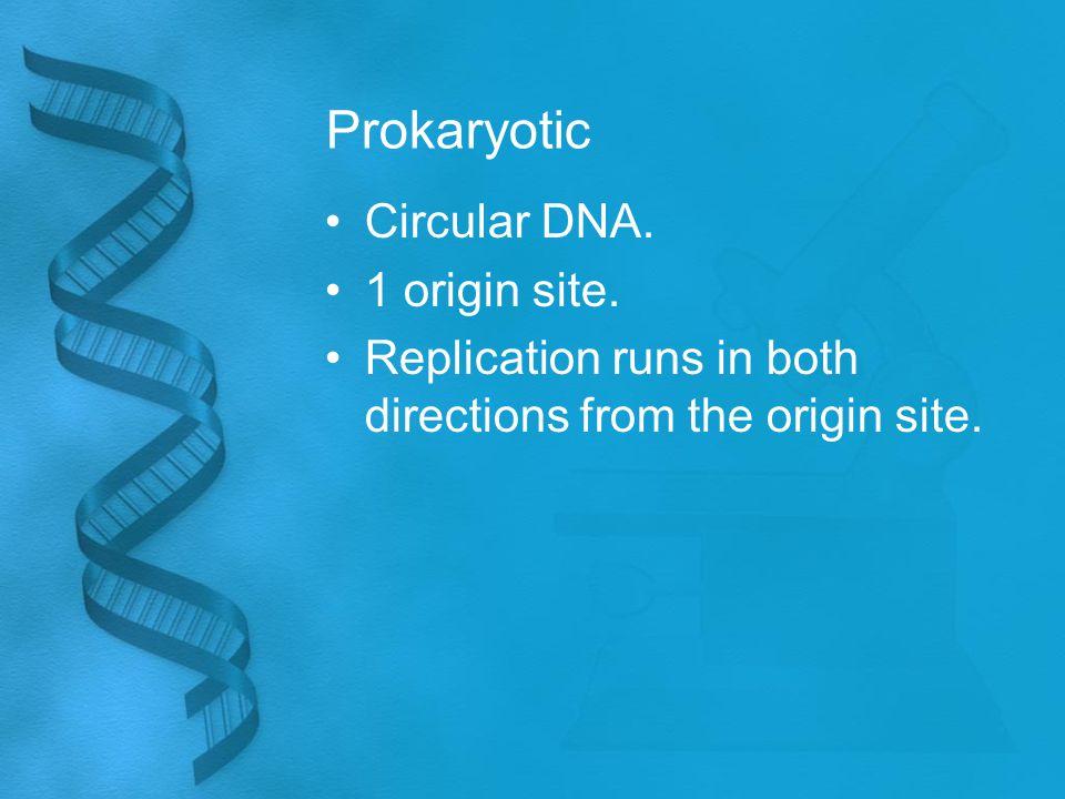 Prokaryotic Circular DNA. 1 origin site. Replication runs in both directions from the origin site.