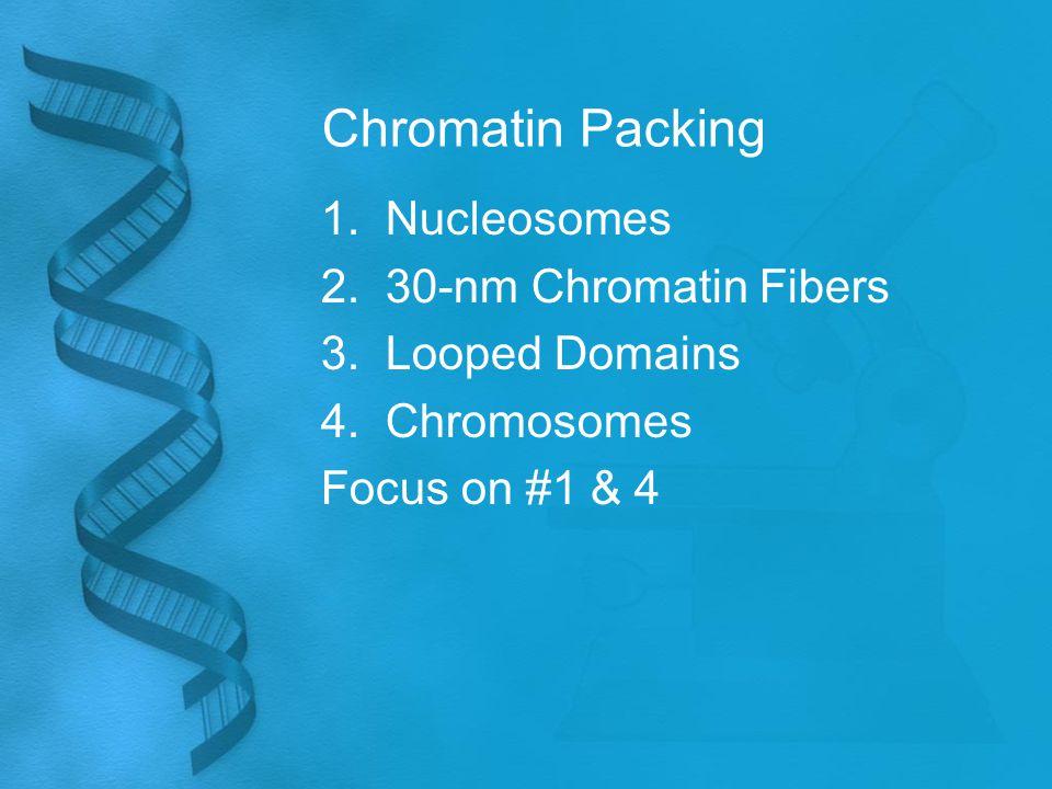 Chromatin Packing 1. Nucleosomes 2. 30-nm Chromatin Fibers 3.