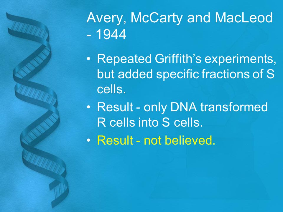 Avery, McCarty and MacLeod - 1944 Repeated Griffith's experiments, but added specific fractions of S cells. Result - only DNA transformed R cells into