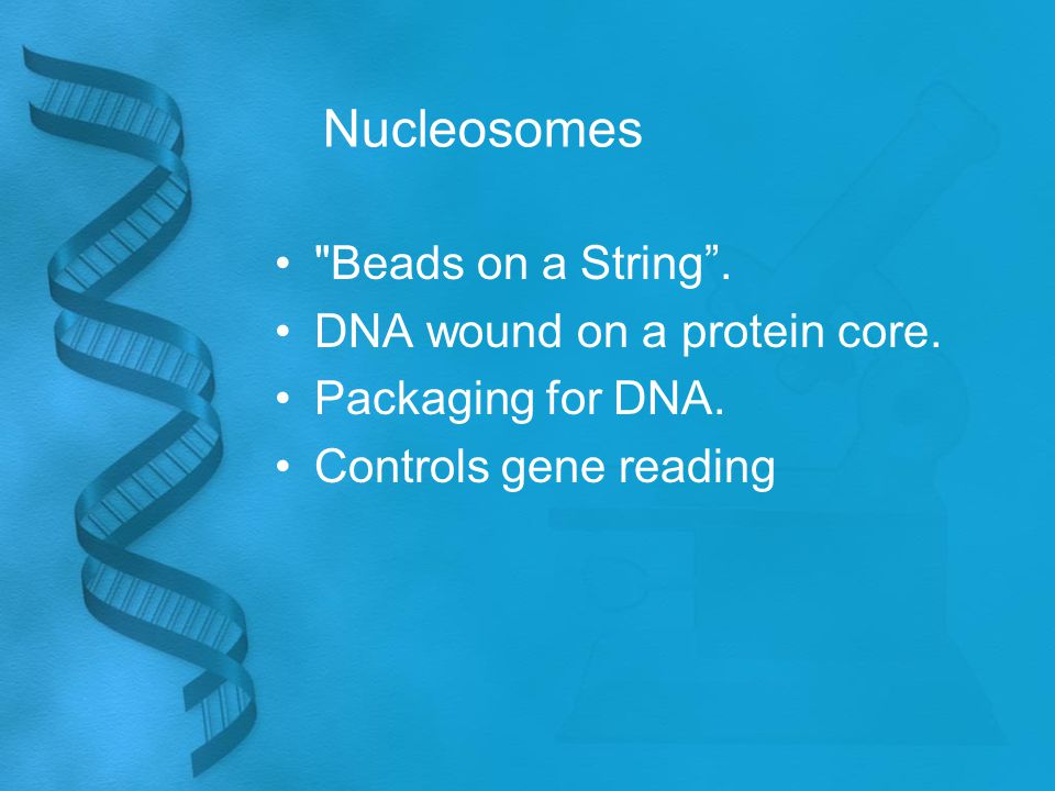 Nucleosomes Beads on a String . DNA wound on a protein core.