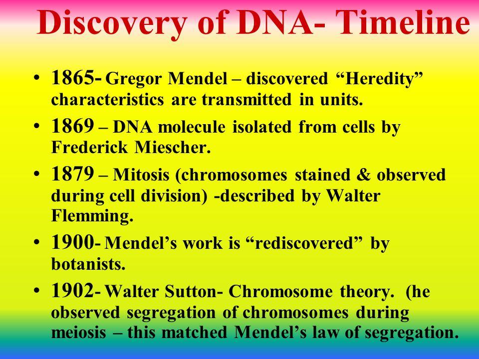 1911- Thomas Hunt Morgan & students- study fruit flies- show chromosomes carry genes.