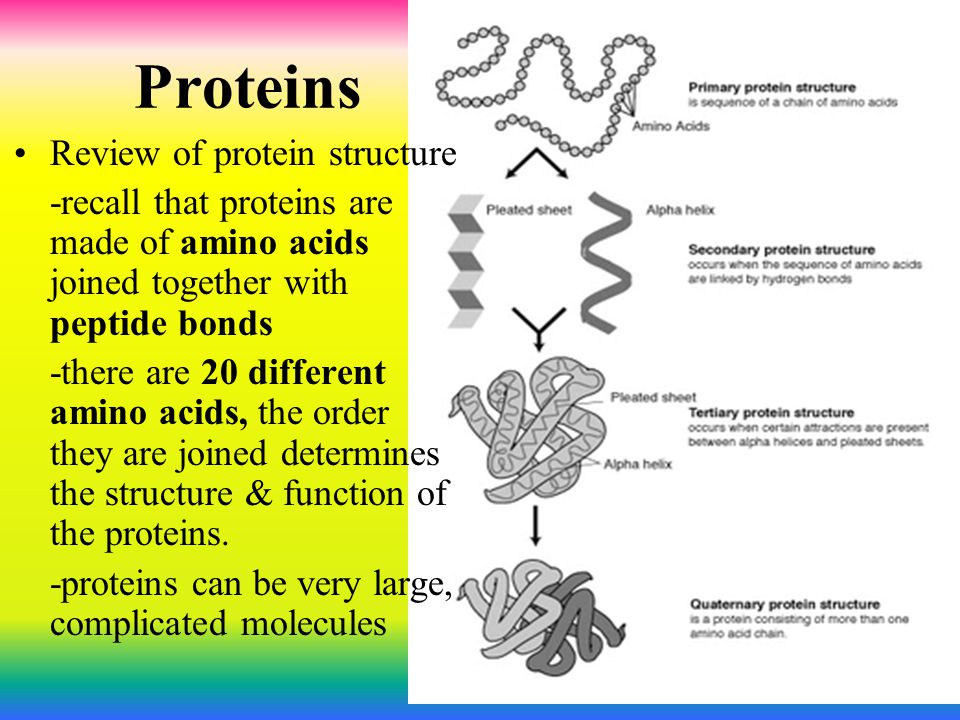 Proteins Review of protein structure -recall that proteins are made of amino acids joined together with peptide bonds -there are 20 different amino ac