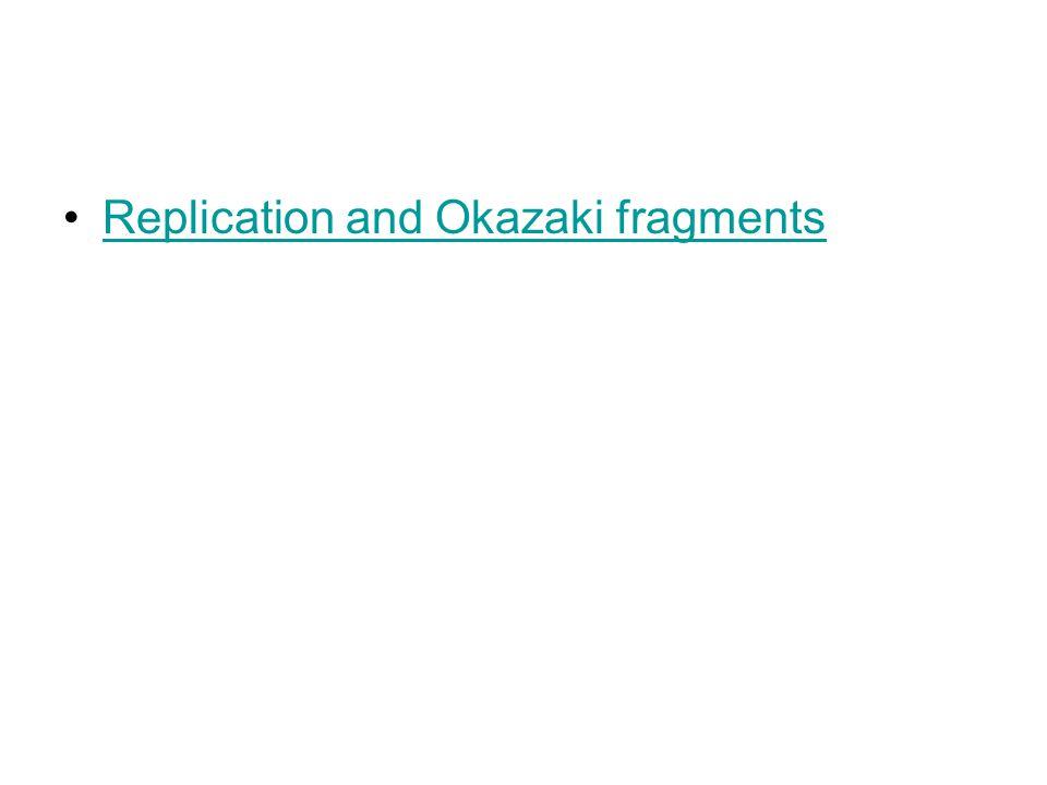 Replication and Okazaki fragments