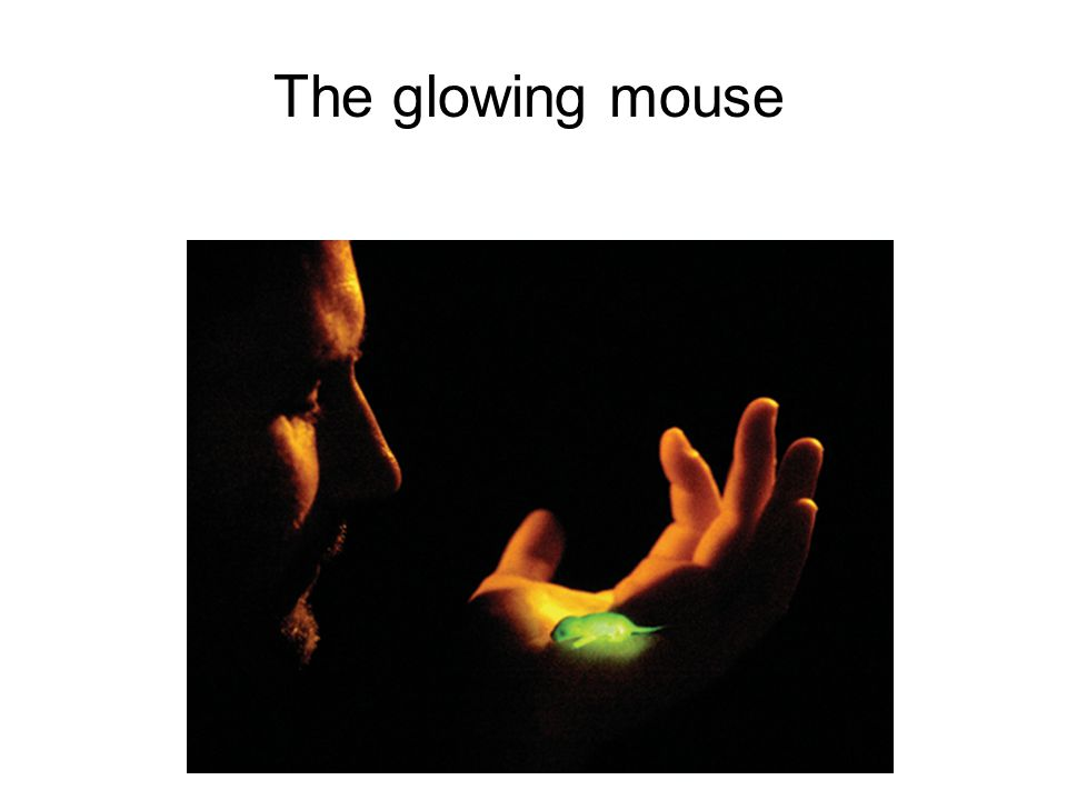 The glowing mouse