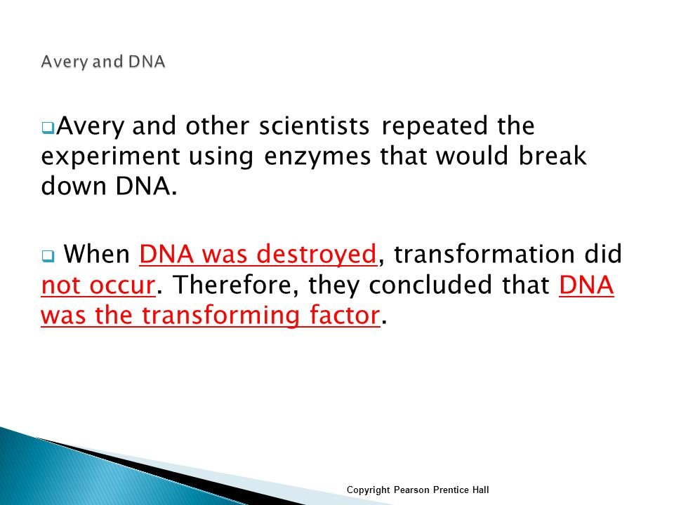  Avery and other scientists repeated the experiment using enzymes that would break down DNA.