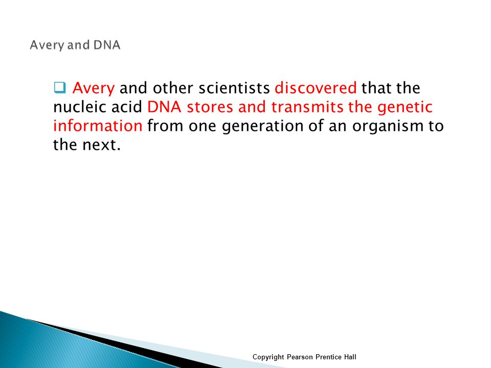  Avery and other scientists discovered that the nucleic acid DNA stores and transmits the genetic information from one generation of an organism to the next.