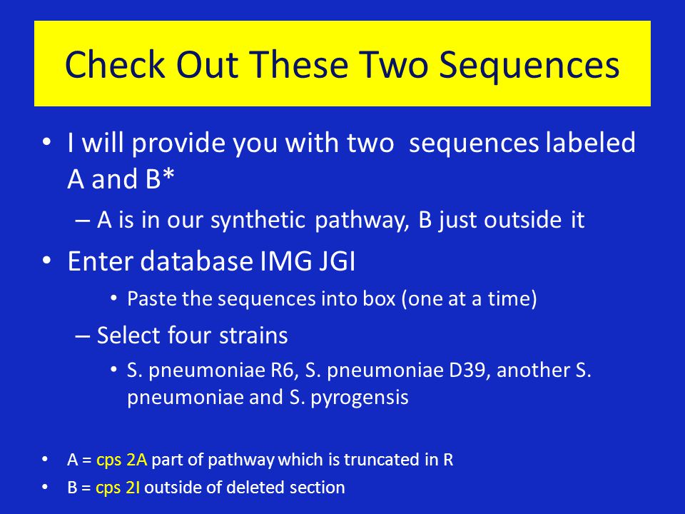 Check Out These Two Sequences I will provide you with two sequences labeled A and B* – A is in our synthetic pathway, B just outside it Enter database IMG JGI Paste the sequences into box (one at a time) – Select four strains S.