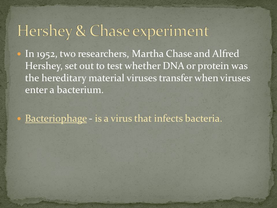 In 1952, two researchers, Martha Chase and Alfred Hershey, set out to test whether DNA or protein was the hereditary material viruses transfer when viruses enter a bacterium.