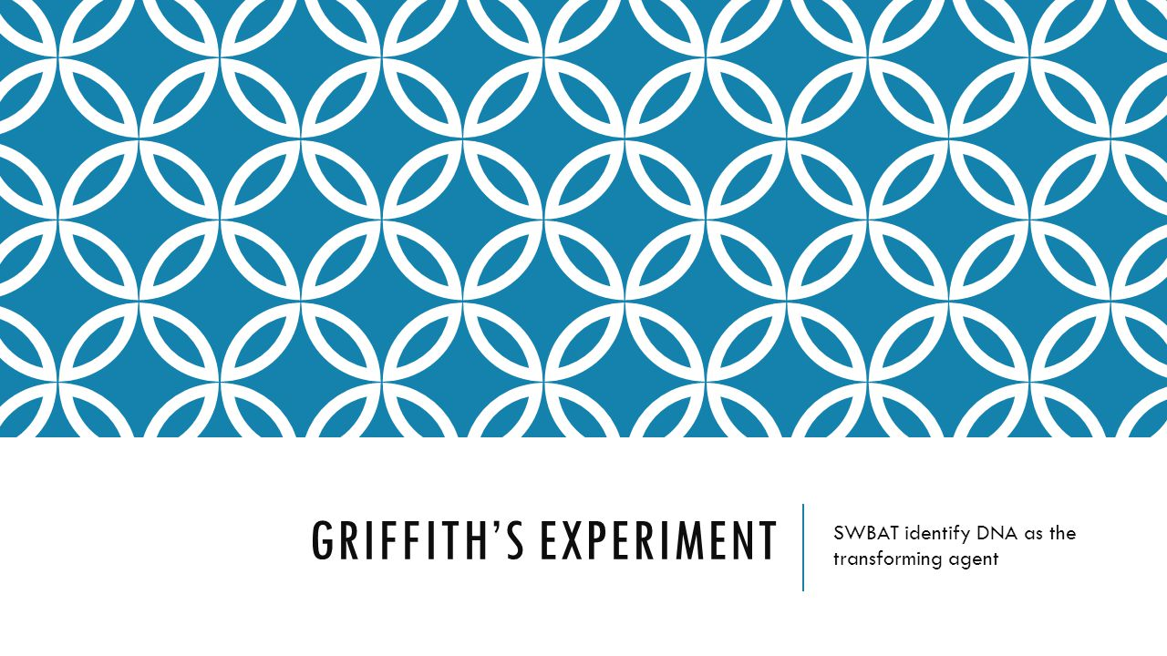 GRIFFITH'S EXPERIMENT SWBAT identify DNA as the transforming agent