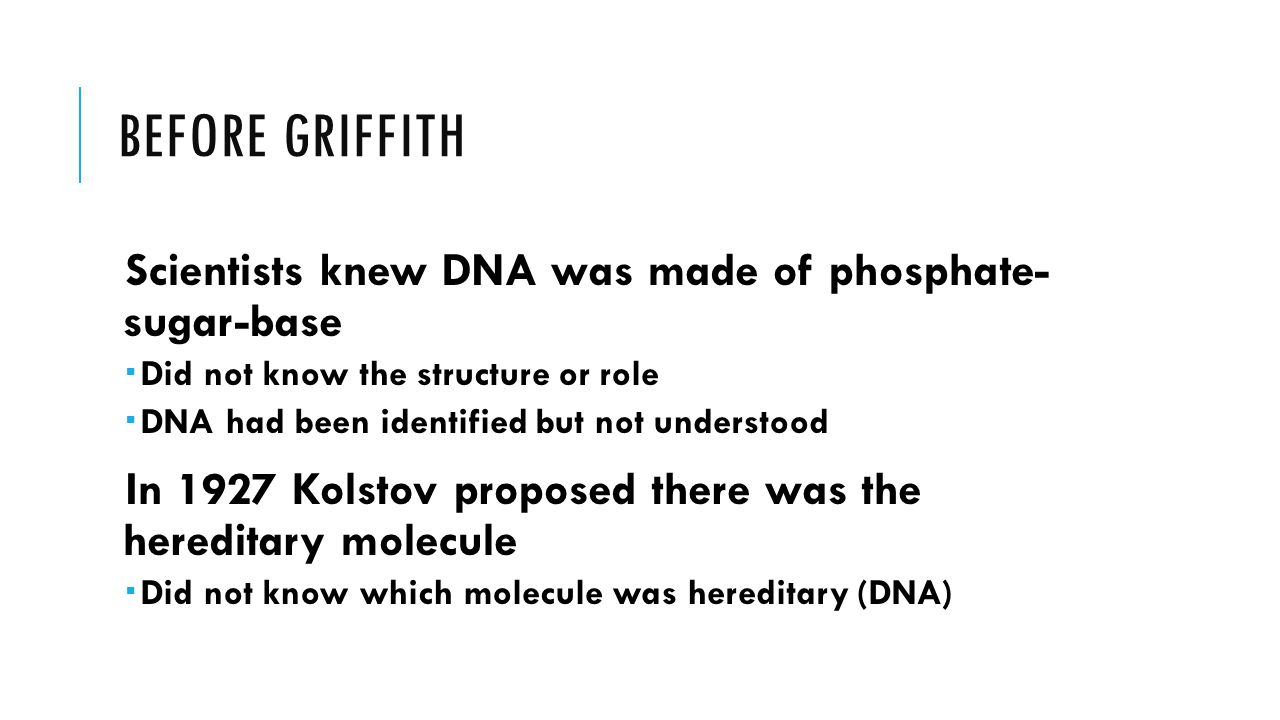 BEFORE GRIFFITH Scientists knew DNA was made of phosphate- sugar-base  Did not know the structure or role  DNA had been identified but not understood In 1927 Kolstov proposed there was the hereditary molecule  Did not know which molecule was hereditary (DNA)
