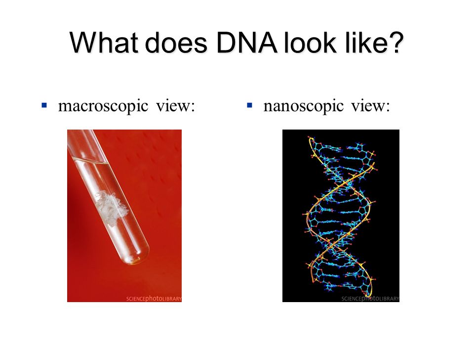 What does DNA look like  macroscopic view:  nanoscopic view: