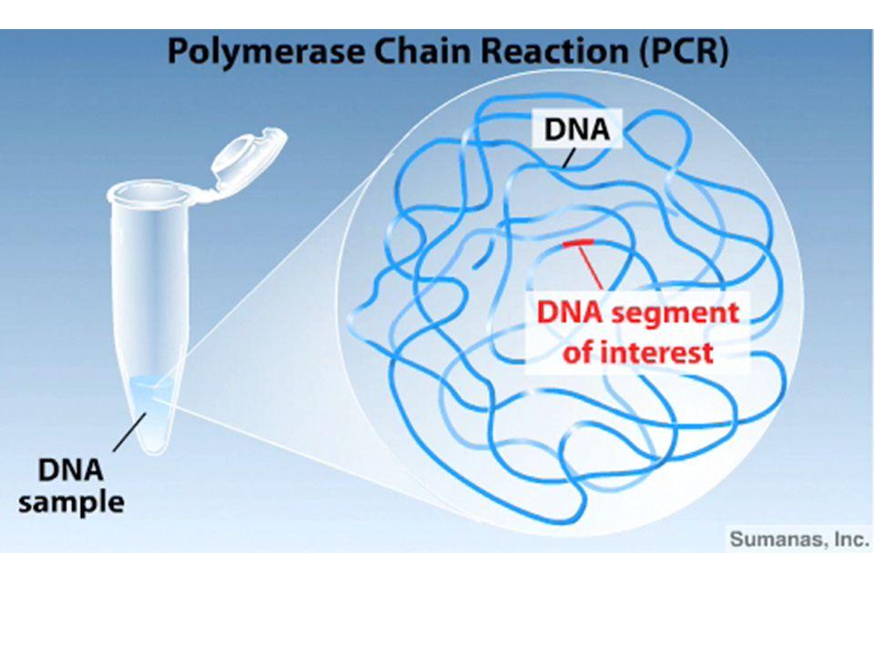 Biological Information inter-species organismal communication in a population molecular communication