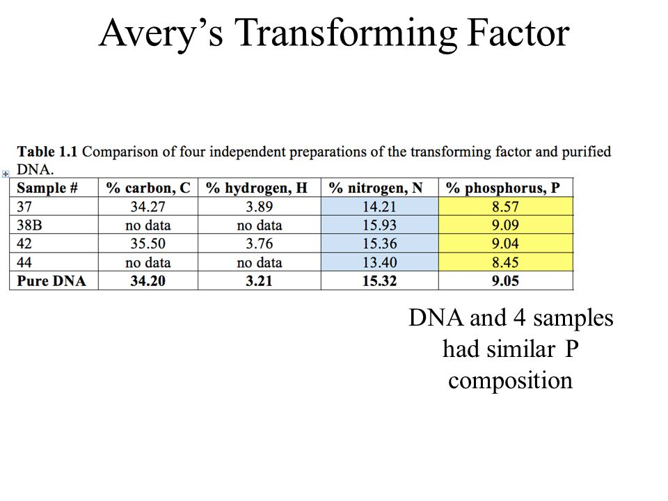 Avery's Transforming Factor DNA and 4 samples had similar P composition