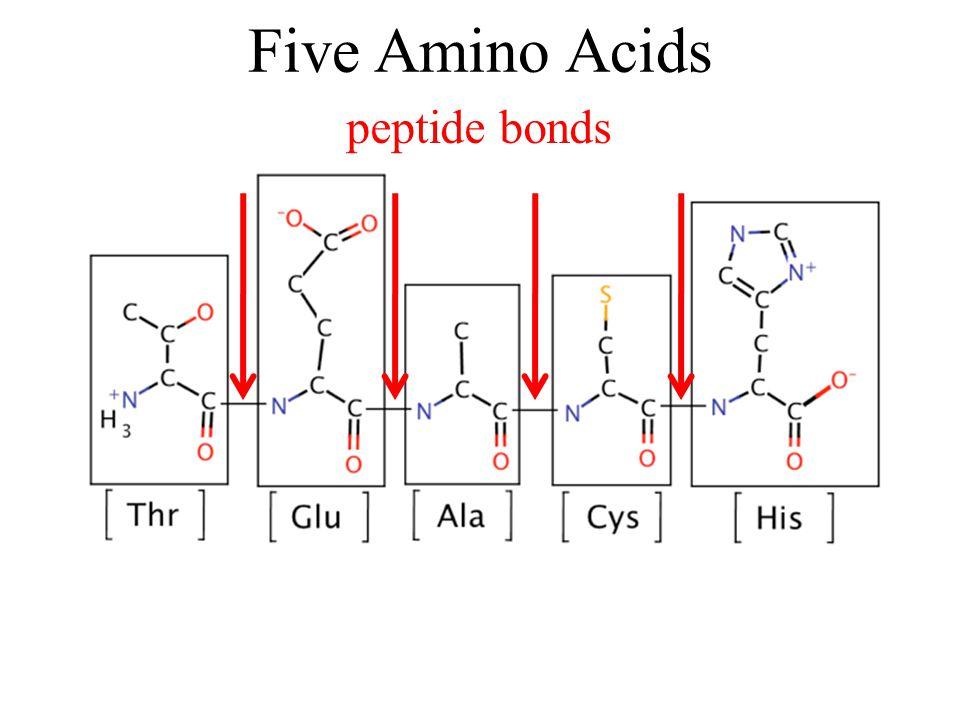 peptide bonds