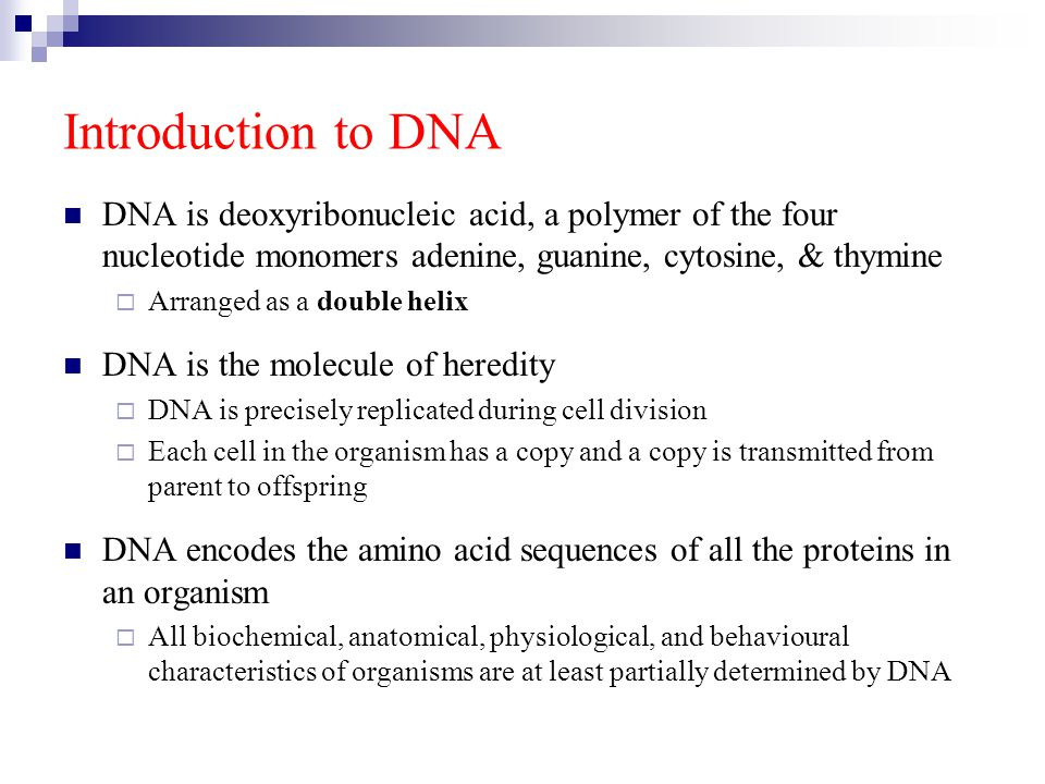 Introduction to DNA DNA is deoxyribonucleic acid, a polymer of the four nucleotide monomers adenine, guanine, cytosine, & thymine  Arranged as a doub