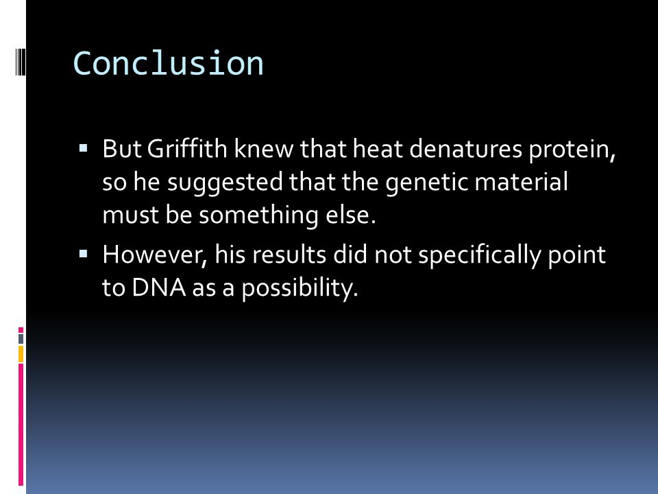 Conclusion  But Griffith knew that heat denatures protein, so he suggested that the genetic material must be something else.