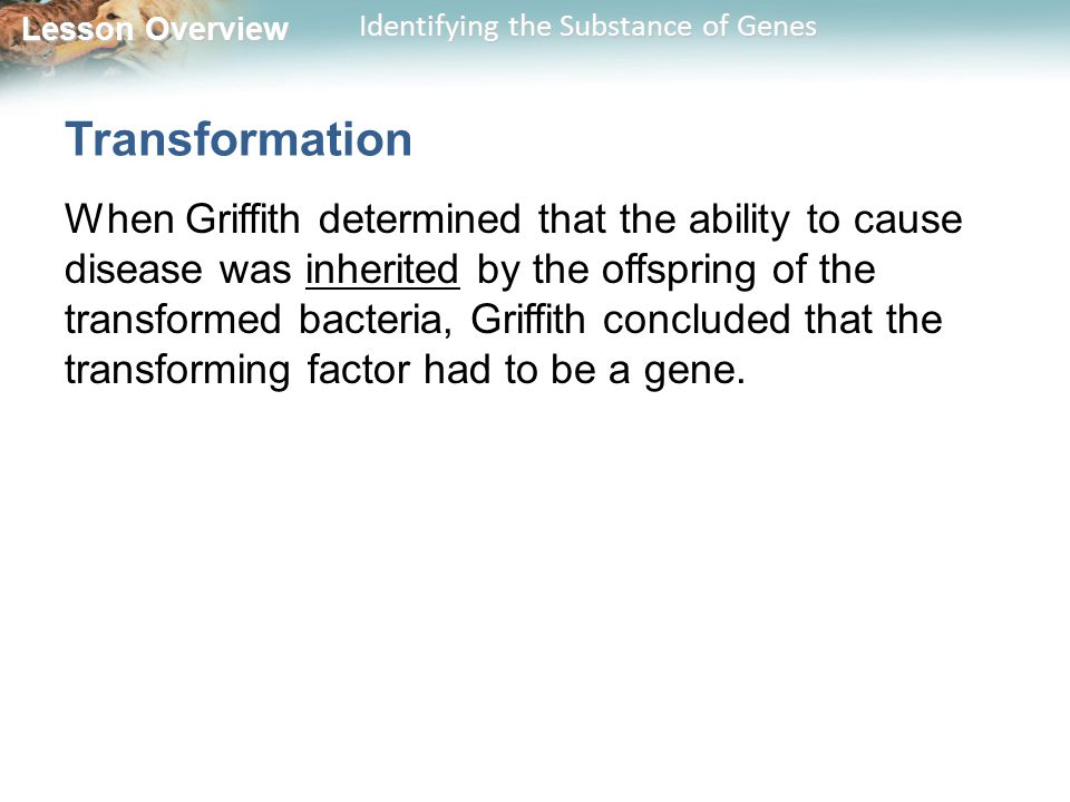 Lesson Overview Lesson Overview Identifying the Substance of Genes Transformation When Griffith determined that the ability to cause disease was inher
