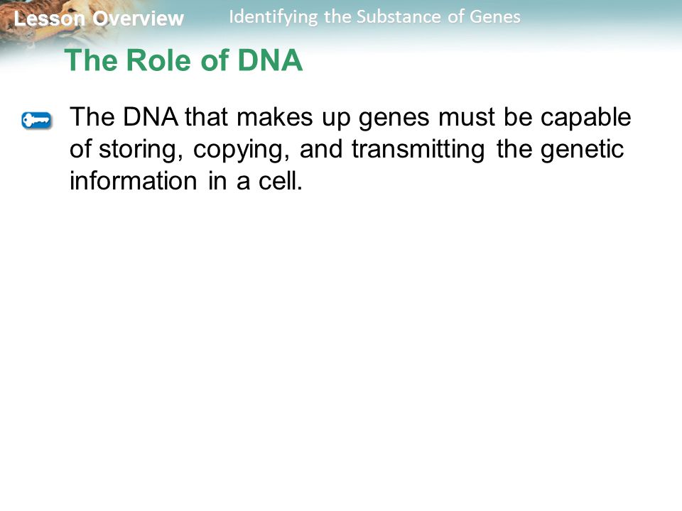 Lesson Overview Lesson Overview Identifying the Substance of Genes The Role of DNA The DNA that makes up genes must be capable of storing, copying, an
