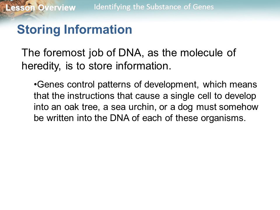 Lesson Overview Lesson Overview Identifying the Substance of Genes Storing Information The foremost job of DNA, as the molecule of heredity, is to sto