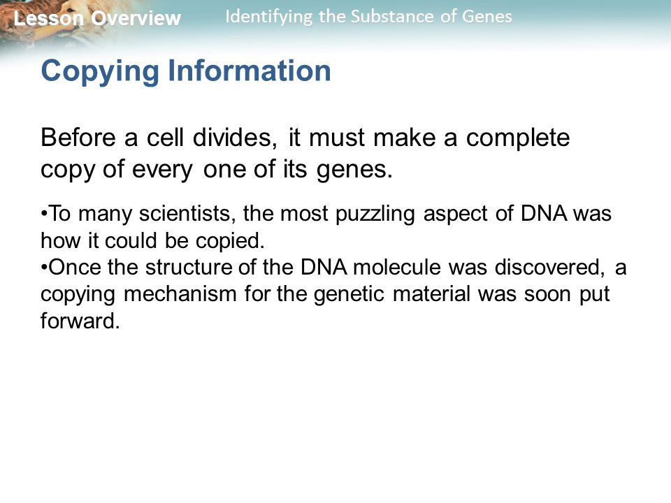 Lesson Overview Lesson Overview Identifying the Substance of Genes Copying Information Before a cell divides, it must make a complete copy of every on