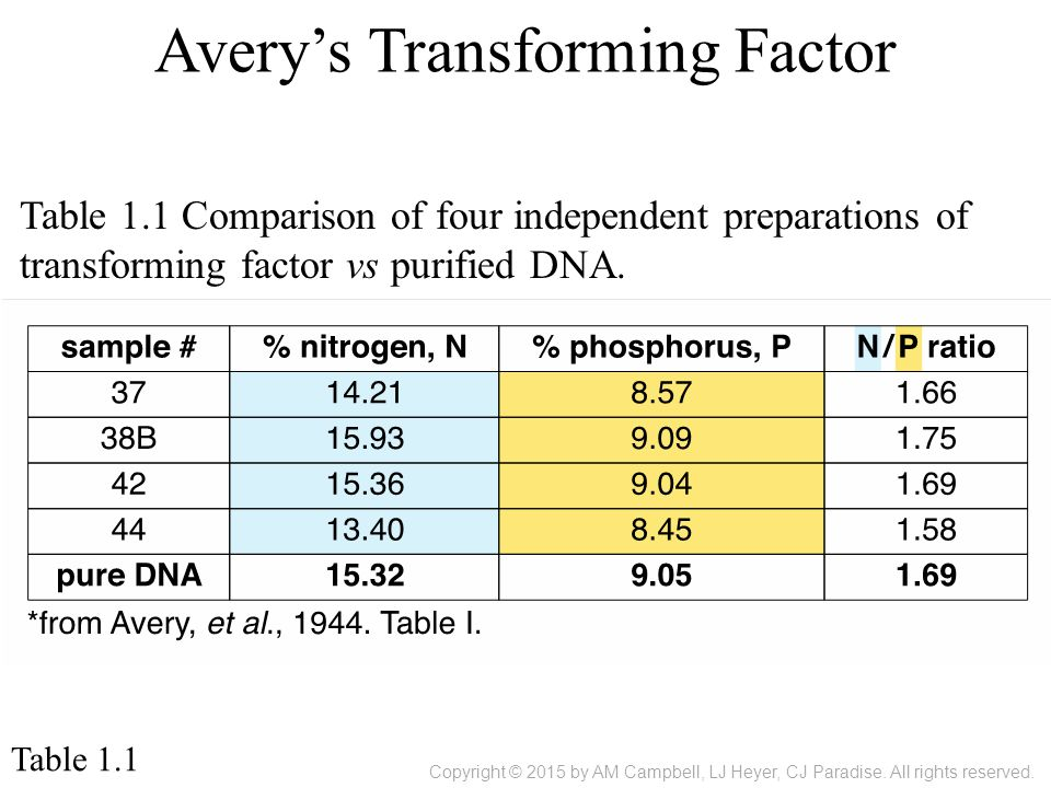 Avery's Transforming Factor Table 1.1 Table 1.1 Comparison of four independent preparations of transforming factor vs purified DNA.